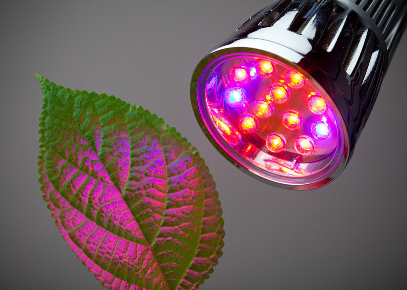 6 Best Led Grow Lights For Indoor Gardening Projects